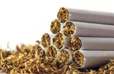 cigarettes in loose tobacco, close up with copy space in the white background